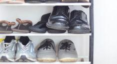 the amazing shoe rack