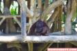 The Princess' 4th Birthday at Avilon Zoo