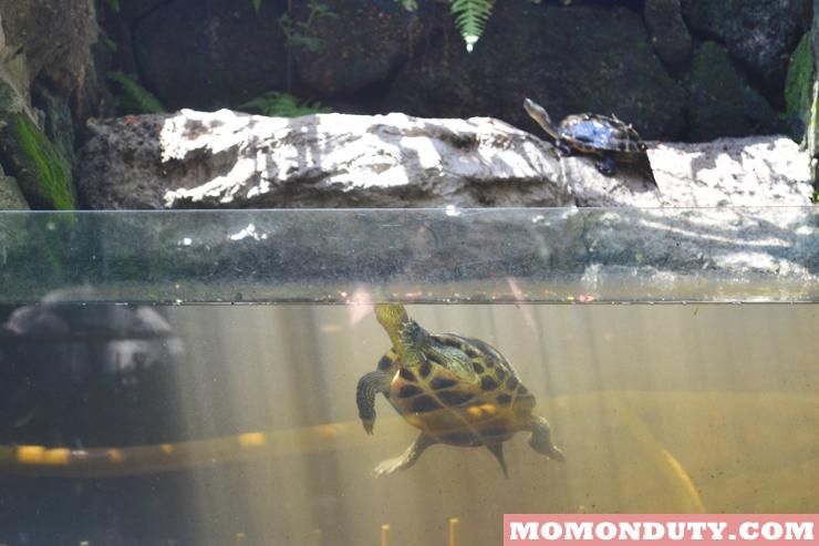 Turtle Tom