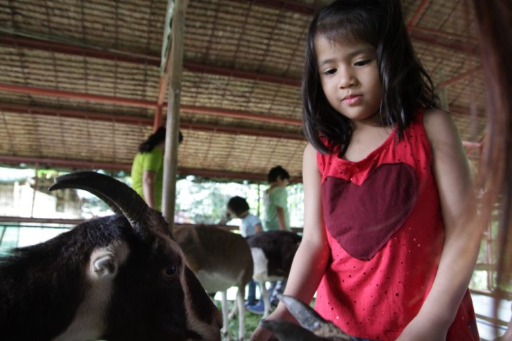 Feeding goats at Kids Camp at The Farm