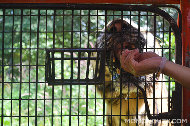 Zoobic Safari provides a one of a kind experience for guests with their close encounters with animals.